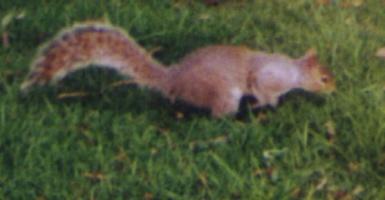 een eekhoorn, geen mol